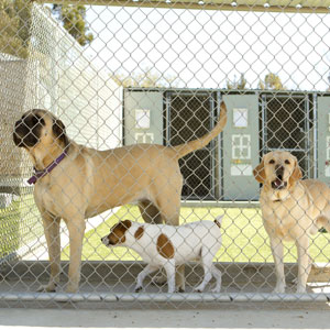 dog kennel cleaning and sanitizing