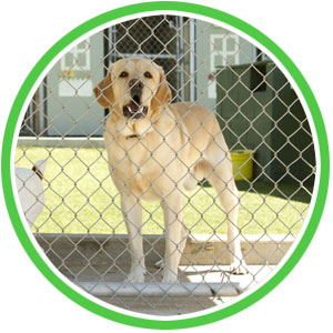 dog kennel sanitizing and disinfection